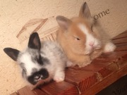 Породистые кролики Беларусь